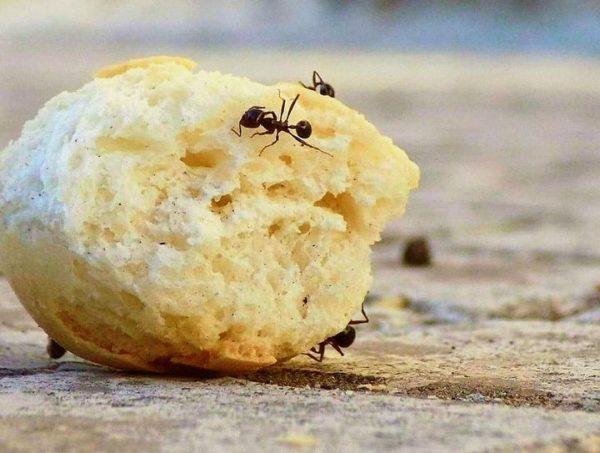 mravce v domácnosti