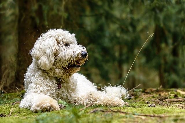 pes príroda kliešte