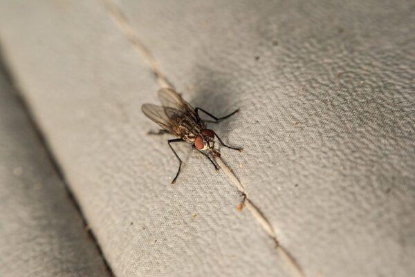 ako vybrať odpudzovač hmyzu