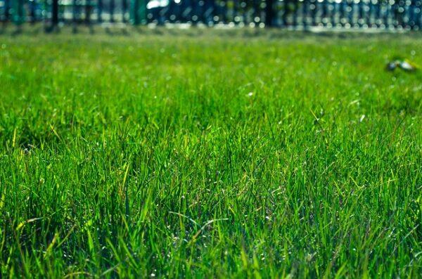 ako vybrať hnojivo na trávnik